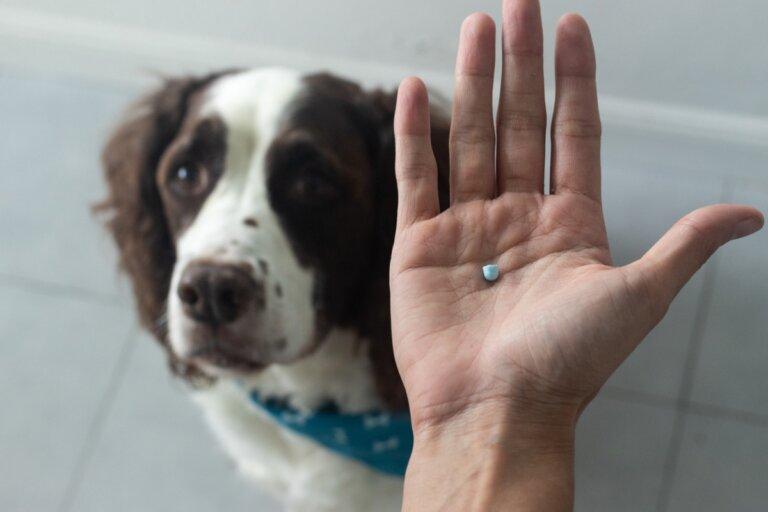 Diclofenaco para perros: uso y dosis