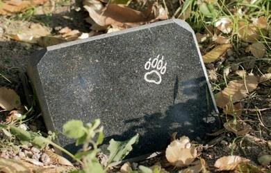 La lápida de un perro