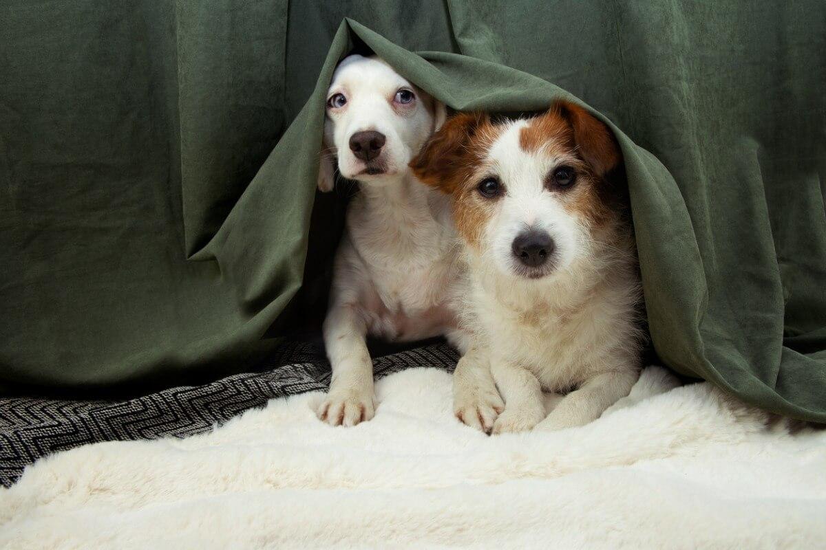Un petit chien avec son compagnon.