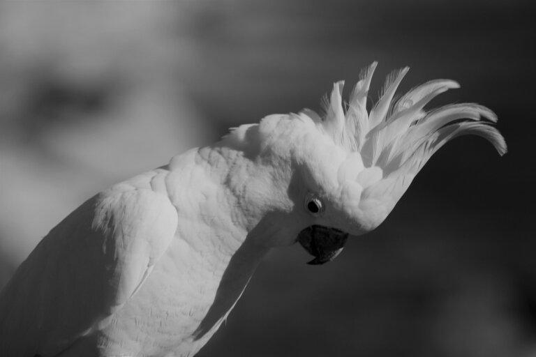 Estrés en pájaros domésticos: causas, síntomas y soluciones