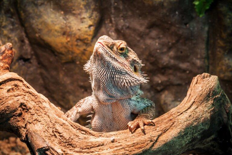 Hipotermia en reptiles domésticos: causas, síntomas y tratamiento