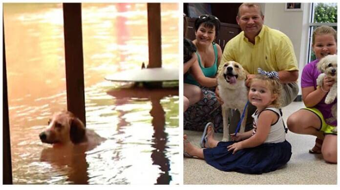Perrita fue adoptada por hombre que la salvó después de haber estado encadenada en inundación