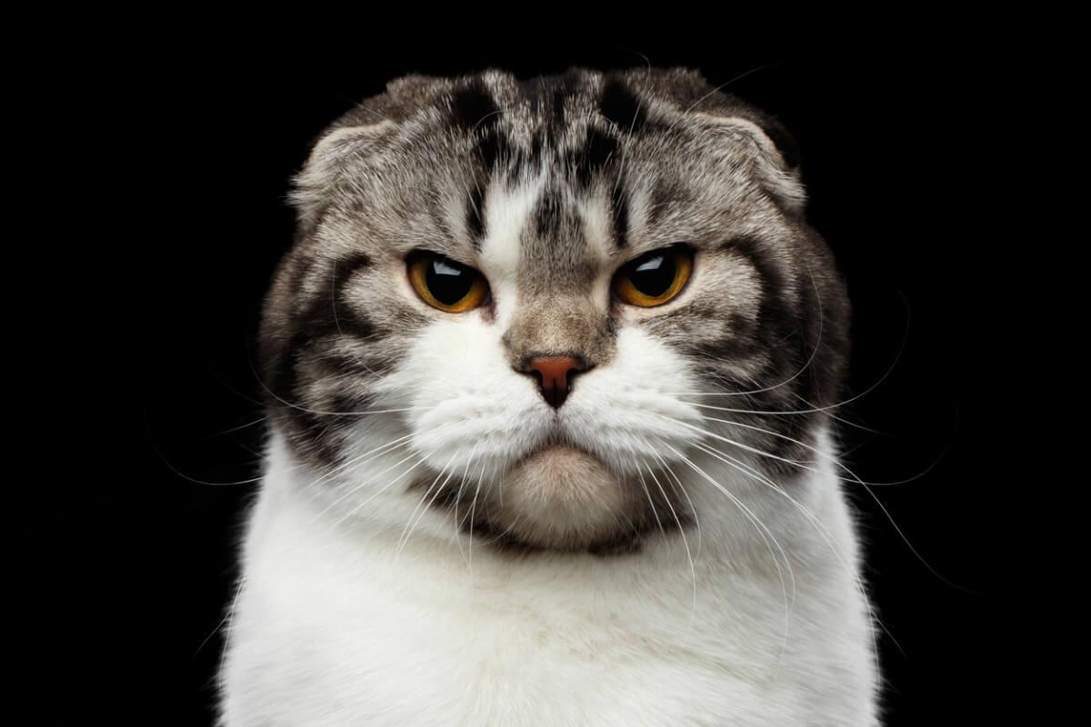 A mi gato no le gusta que le toquen las patas: ¿por qué?