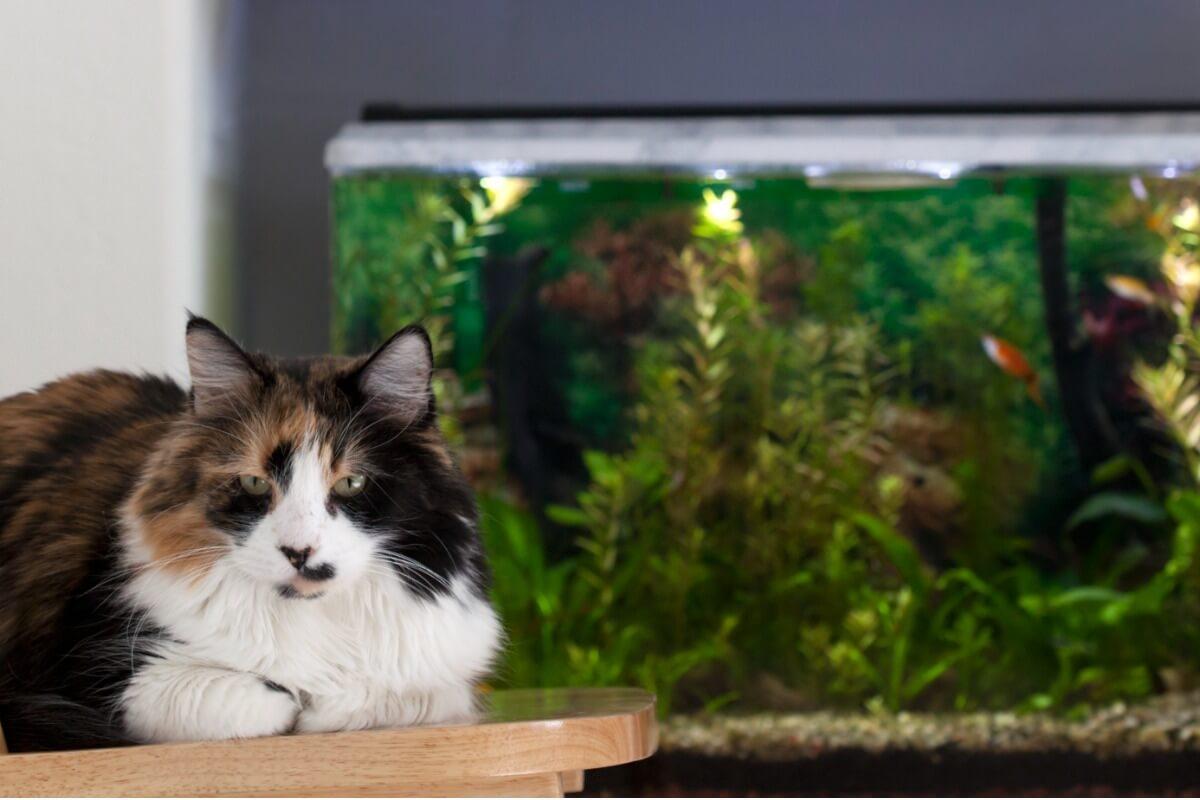 Los gatos pueden convivir con gente.