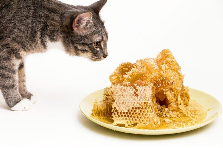 ¿La miel es buena para gatos?