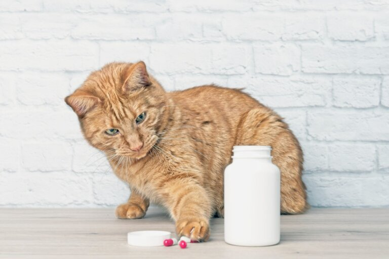 ¿El paracetamol es tóxico para los gatos?
