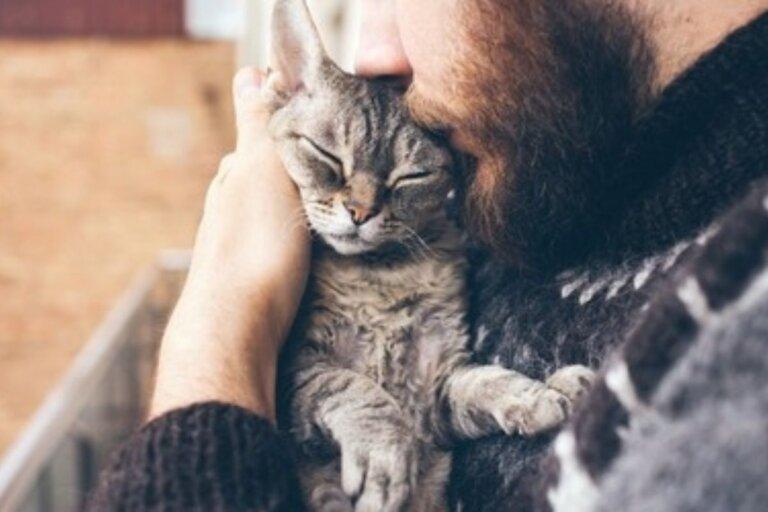¿Sabes si tu gato es perfecto para ti?