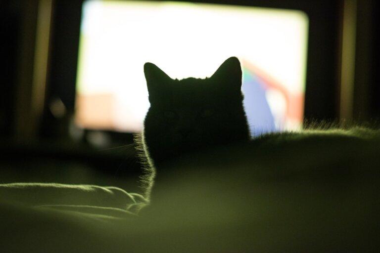 ¿Por qué a mi gato le gusta ver televisión?