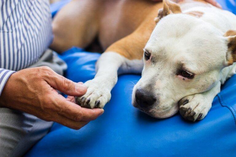 Diferencias entre artritis y artrosis en perros