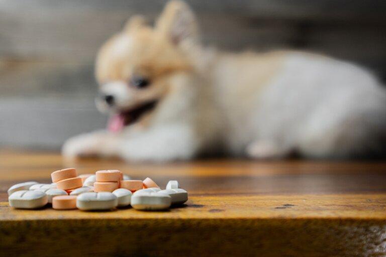 Metoclopramida para perros: dosis y contraindicaciones