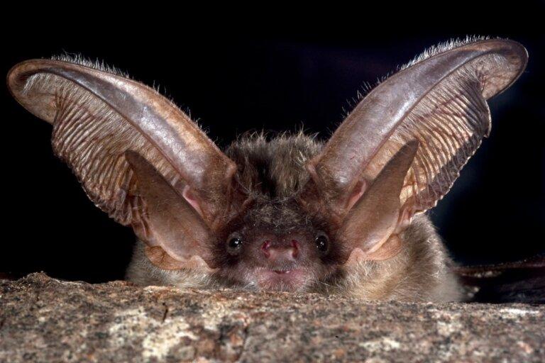 ¿Cómo ahuyentar murciélagos?