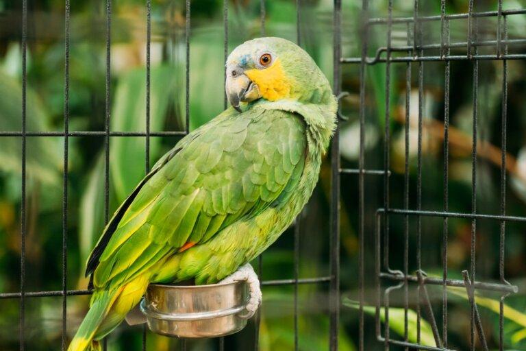 ¿Por qué mi pájaro se come sus heces?