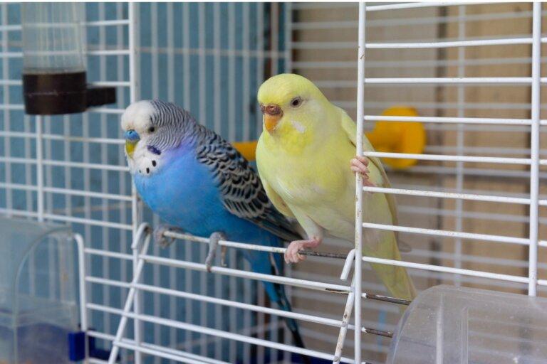 Mi pájaro se ha escapado: ¿qué puedo hacer?