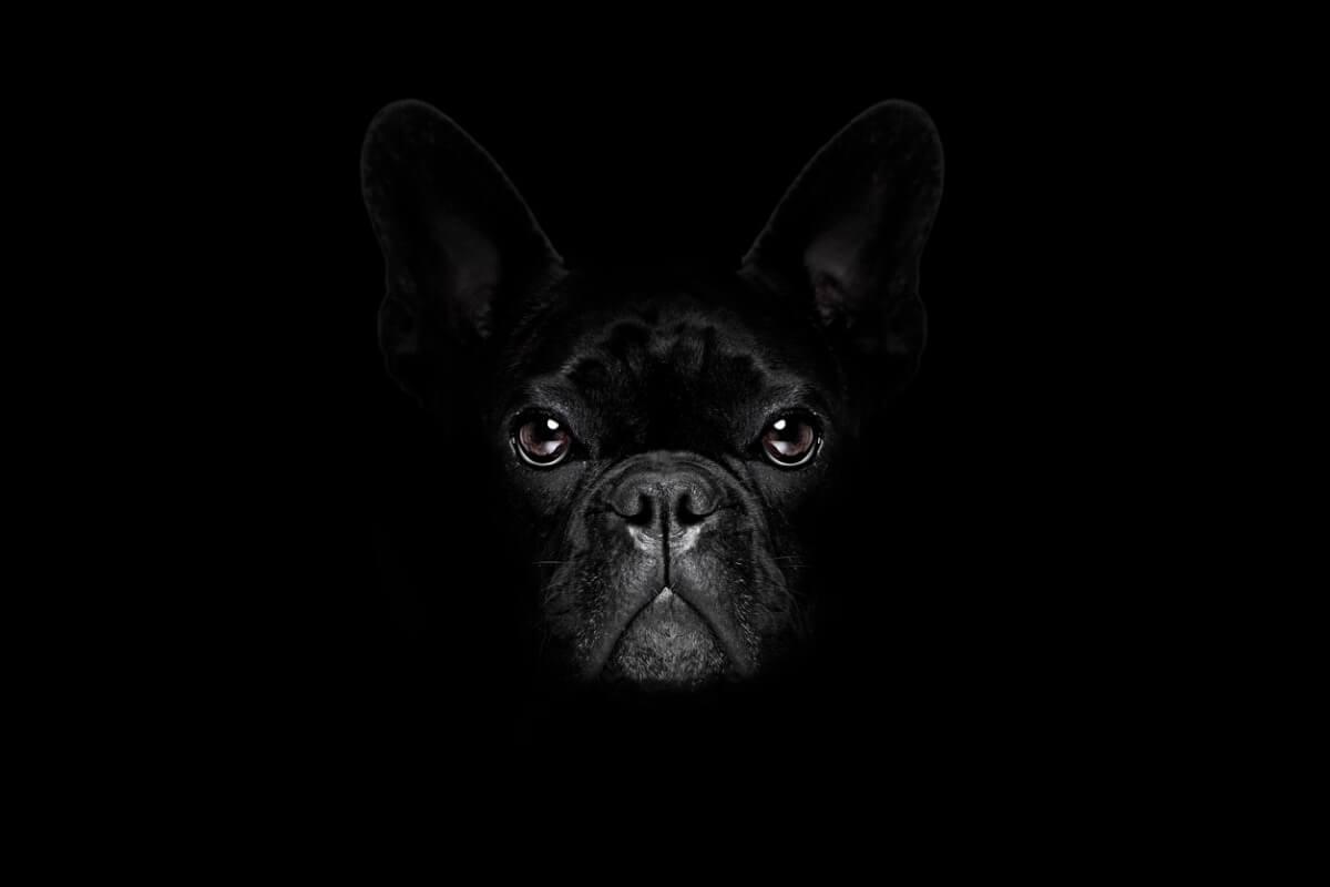 ¿Tu perro le tiene miedo a la oscuridad?