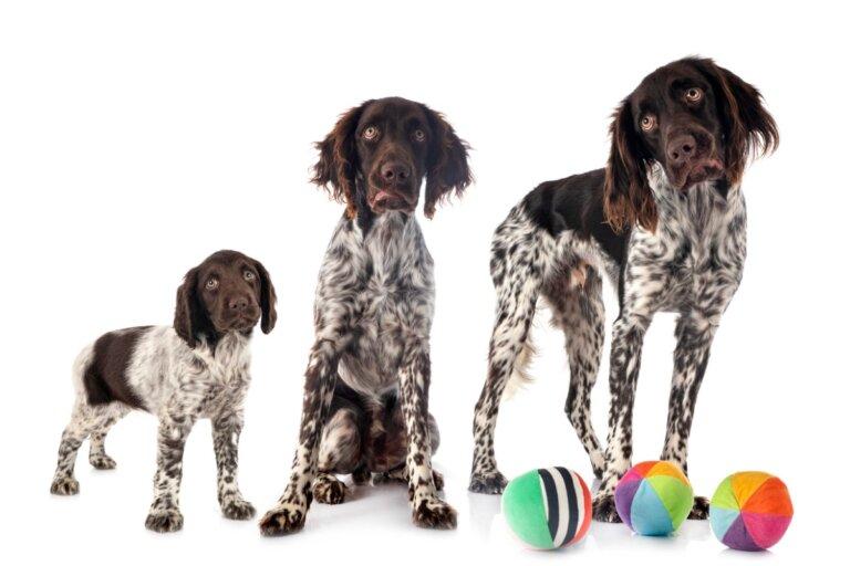 ¿A qué edad dejan de crecer los perros?