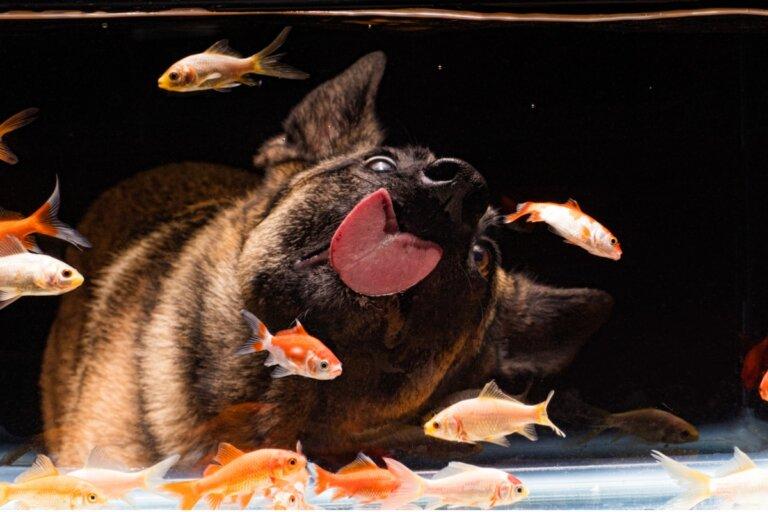 ¿Pueden los perros vivir con peces?