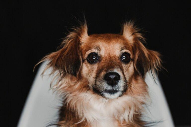 ¿Qué hago si mi perro le teme a la oscuridad?