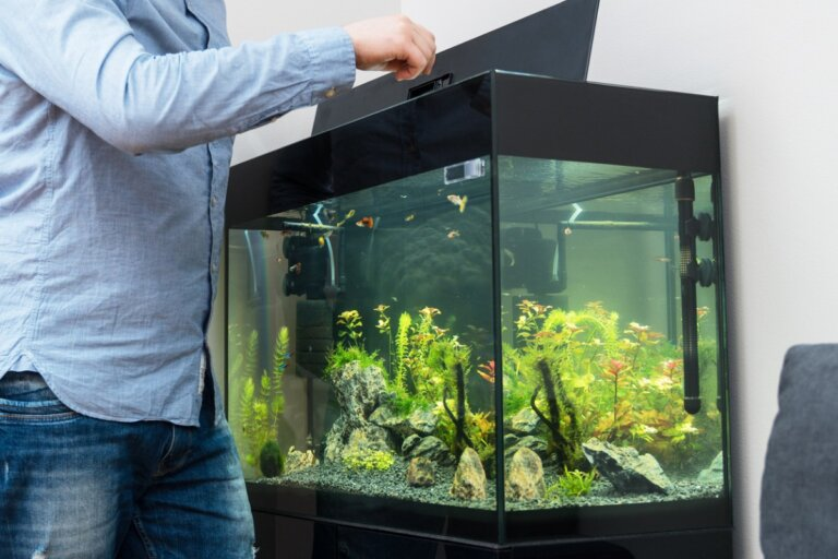 Ciclado del acuario: todo lo que debes saber