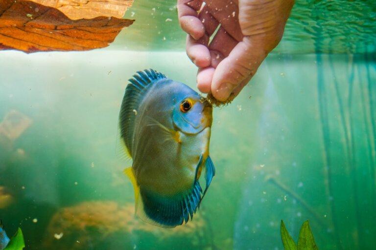 ¿Por qué mi pez no come?