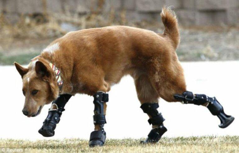 Descubre la historia del primer perro biónico