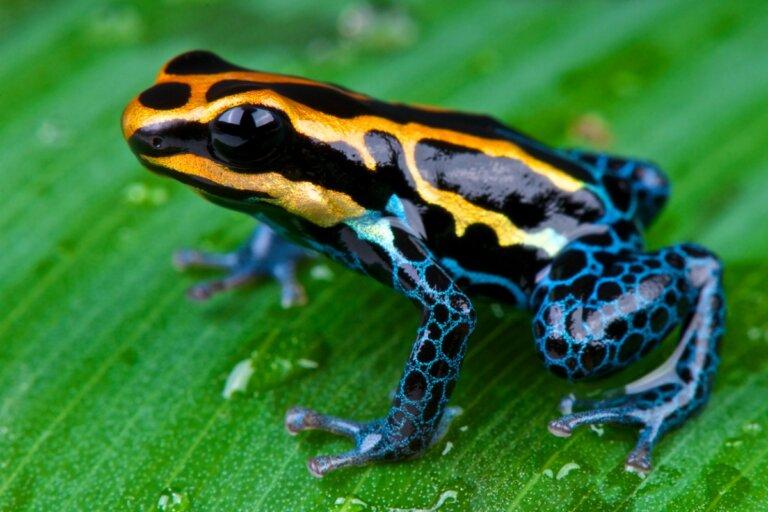 Los 12 animales más hermosos de Ecuador