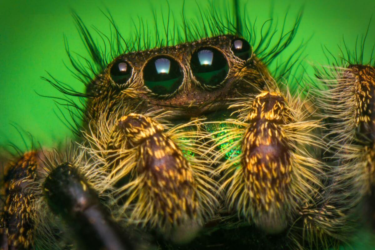 Uno de los ojos más hermosos y raros en el reino animal.