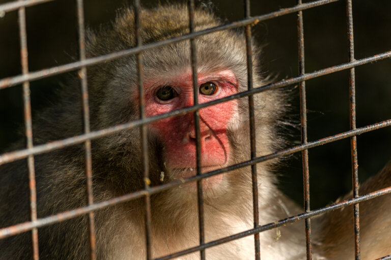 Primer país del mundo en cerrar los zoológicos y liberar a los animales