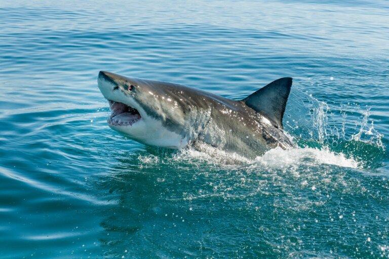 10 curiosidades de los tiburones
