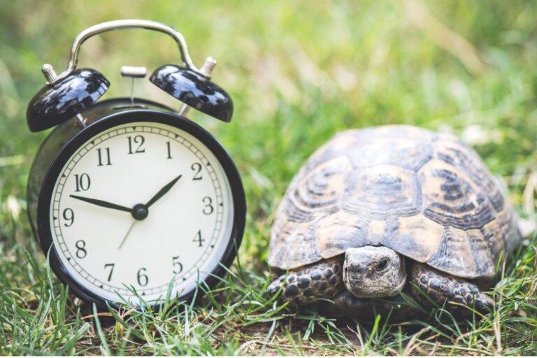 ¿Cuántos años vive una tortuga doméstica?